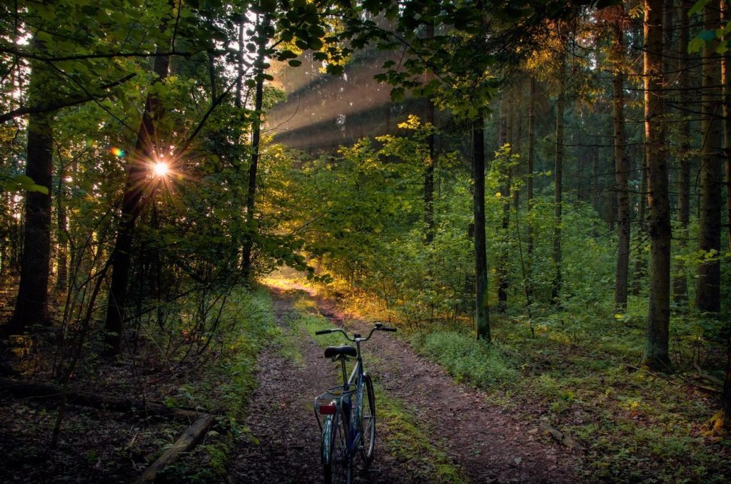 Nature reserves and national parks. Bike in the Woods