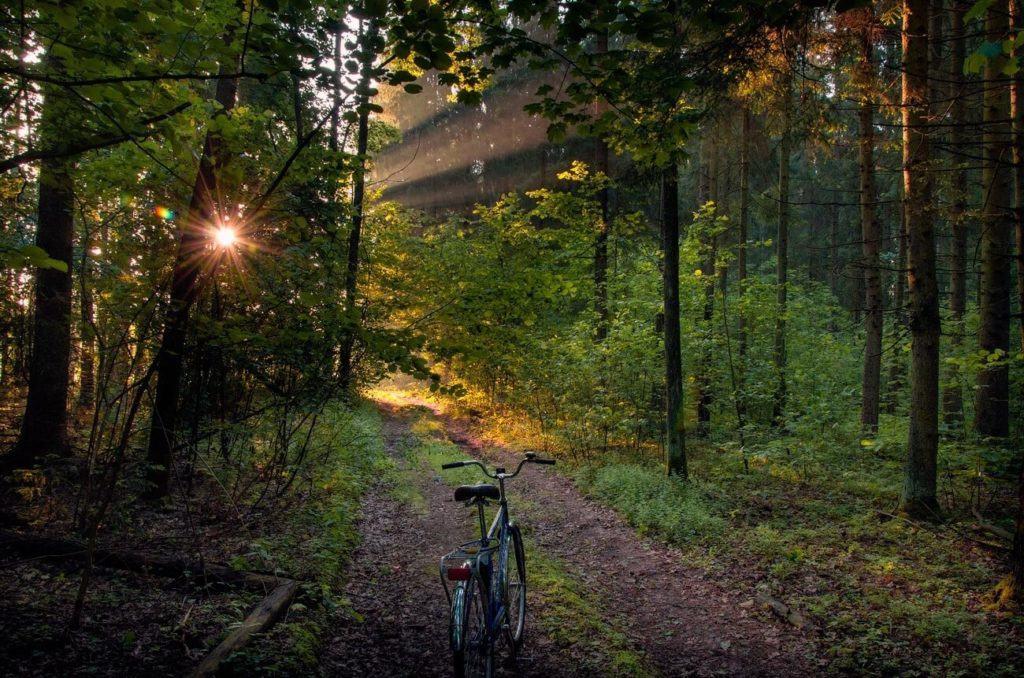 Велодорожка в лесу, отдых в Беларуси