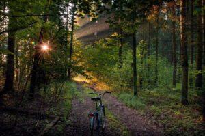Велодорожка в лесу