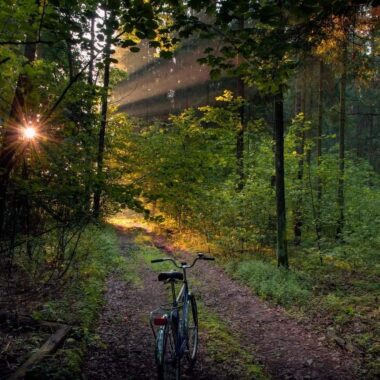 Beautiful nature of Belarus, Forest bike path in the national park
