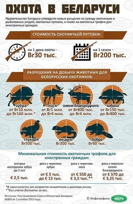 Цены на охоту в Беларуси, инфографик