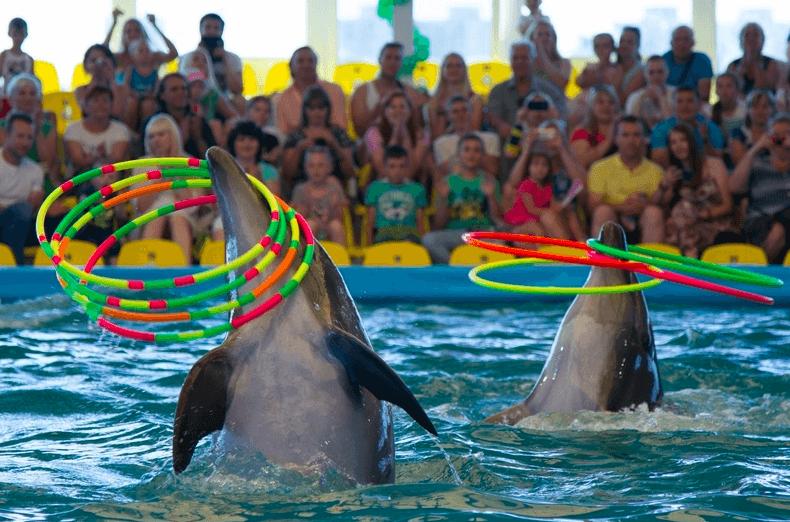 Дельфинарий Немо в Минске, Беларусь
