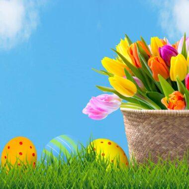 Тюльпаны и яйца на пасху в Беларуси
