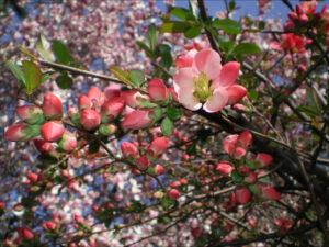 Spring, flowers, music in Dvorik in Minsk 2019, festival of spring