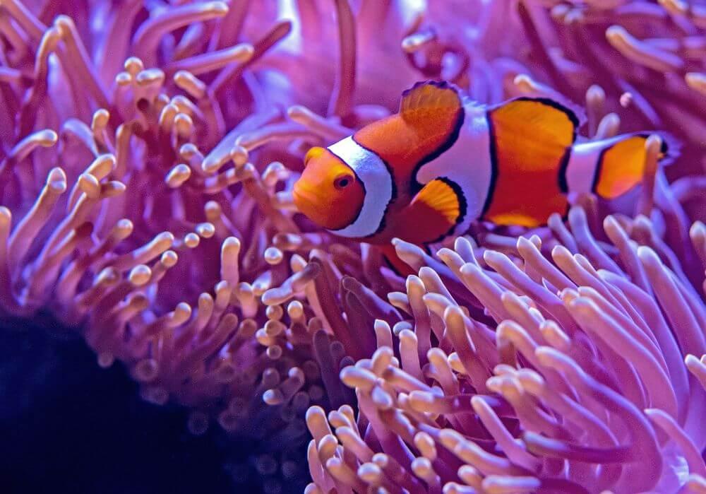 Nemo dolphinarium and fish in an aquarium