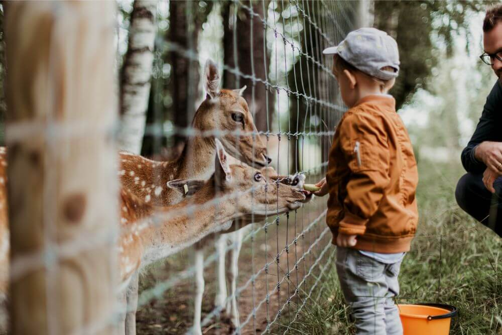 Child with the deers, zoo in Minsk